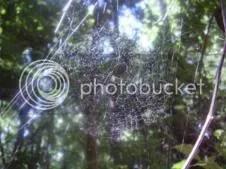 Spiderweb (c) Lynda Bernhardt