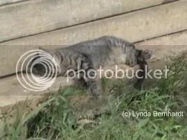 Sleeping Cat (c) Lynda Bernhardt