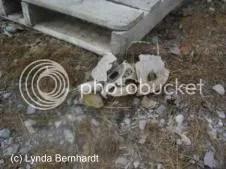 Skull (c) Lynda Bernhardt