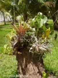 Plants in tree trunk (c) Lynda Bernhardt