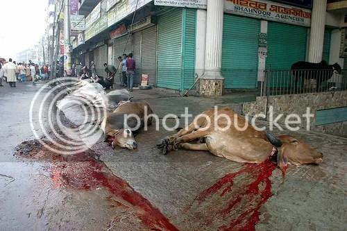 Vaques massacrades segons el ritus musulmà