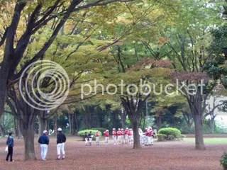 Zelkova trees in the park, Ooka, Yokohama
