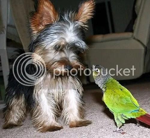 bird_dog