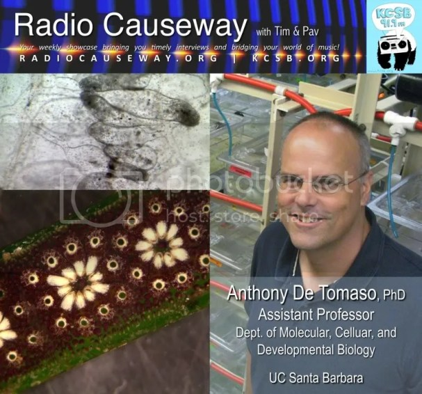 Radio Causeway: Preventing Rejection of Transplanted Organs, Anthony De Tomaso PhD – May 10, 2011