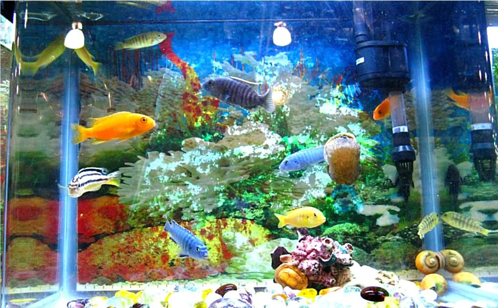 This photograph shows more brightly-colored tropical fishes. Looking at them is a wonderful experience, specially if youre living a rat race in an urban environment.
