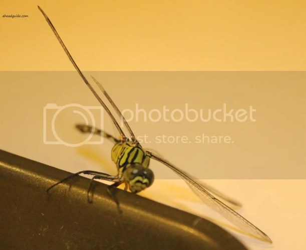 photo dragonflycloseup_zpsba7c5777.jpg