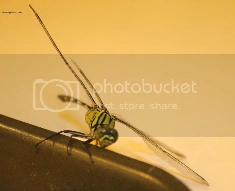photo dragonflycloseup_zpsba7c5777.jpg