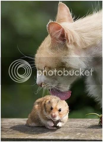 cat hamster