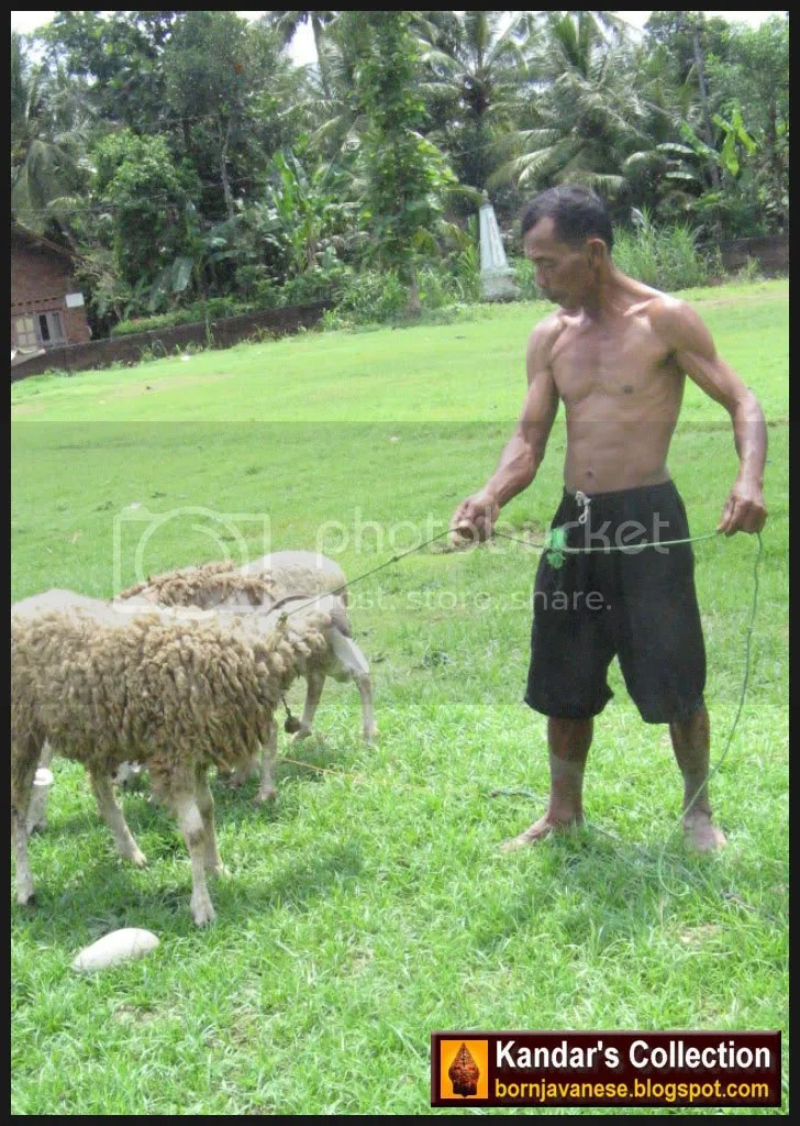 Gembala dan domba-dombanya