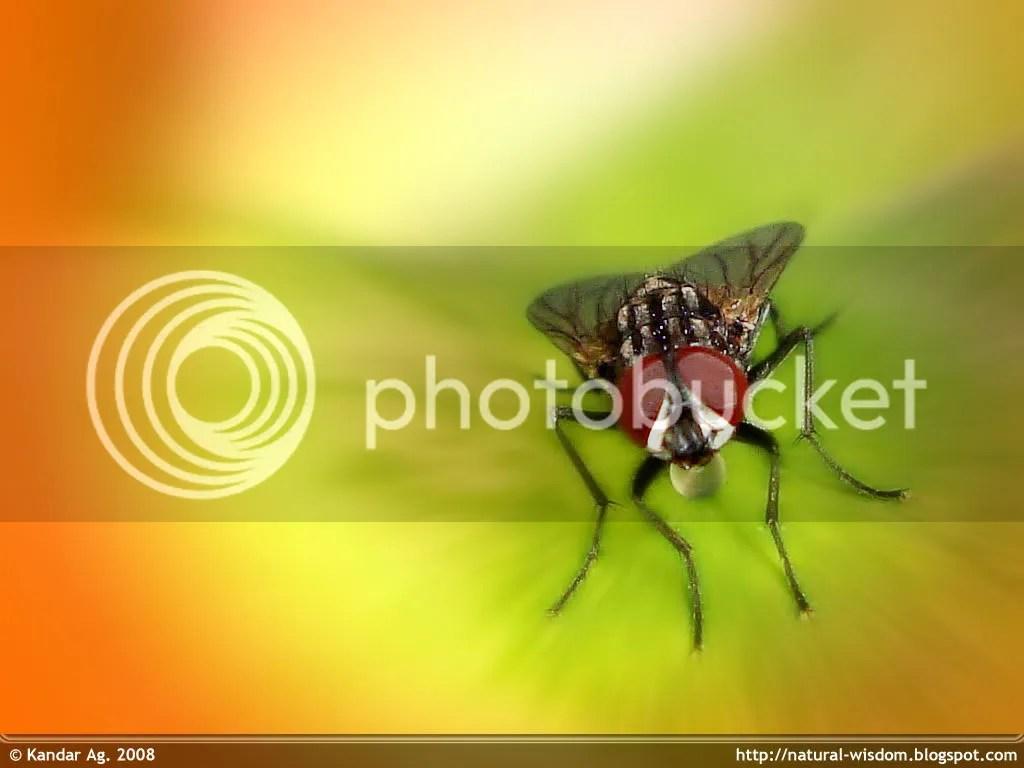 https://i2.wp.com/i234.photobucket.com/albums/ee172/sukandar_ag/Wallpapers/Fly-On-ALeaf_Wallpaper.jpg