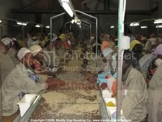 Sorting Coffee in Dire Dawa