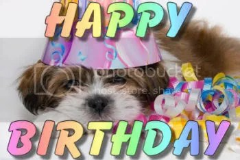 dog happy birthday Pictures, Images and Photos