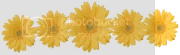 photo Yellow Daisies 180_zpsrjngdm2m.png