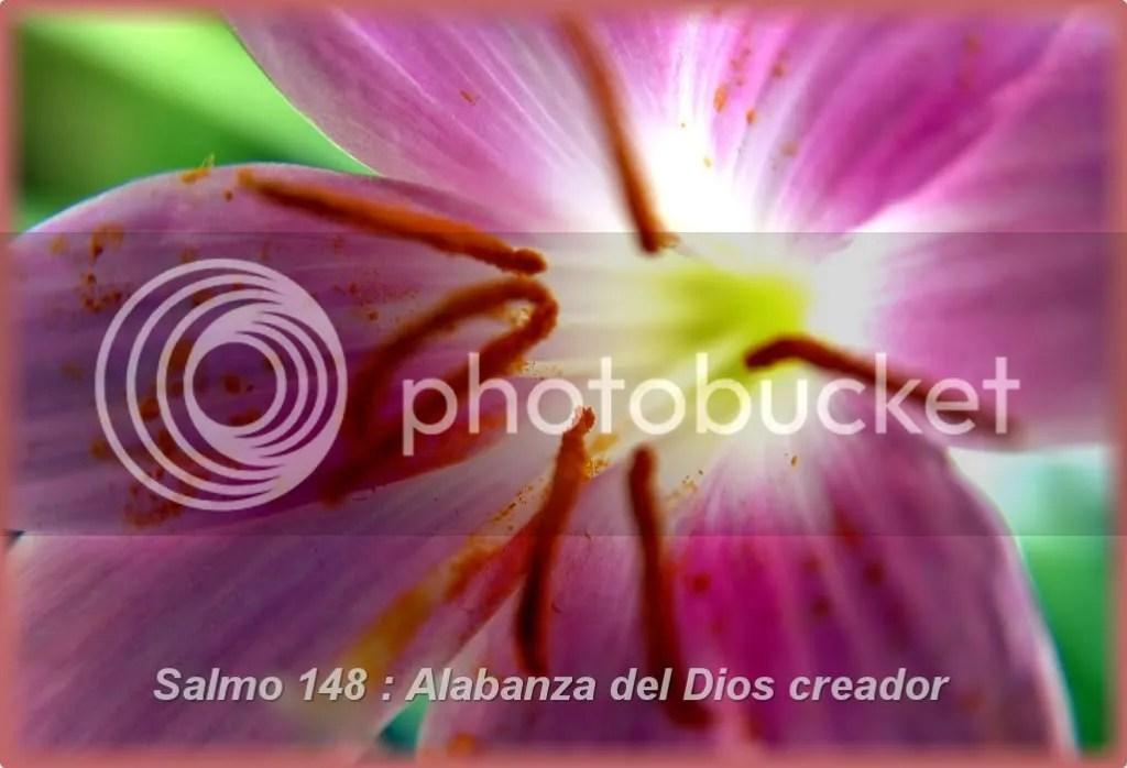 Salmo148AlabanzadelDioscreador.jpg Salmo 148 picture by franciscomartin