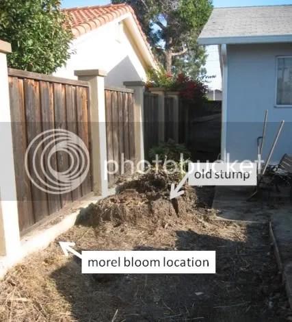 morel bloom location