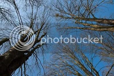 De zon scheen een mooi licht op de nog kale boomtoppen