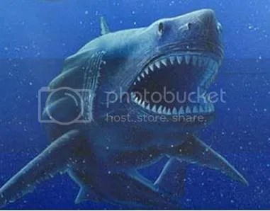 megalodon Pictures, Images and Photos
