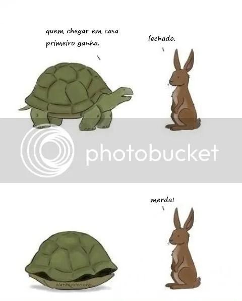 a tartaruga e a lebre coelho