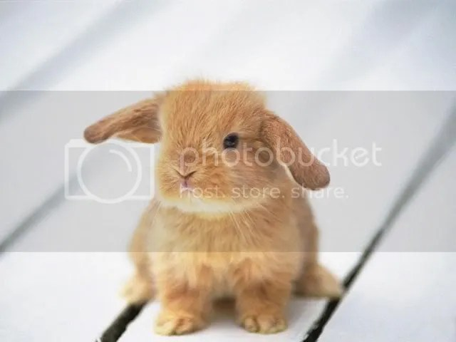 baby bunny photo: baby bunny baby-animals.jpg