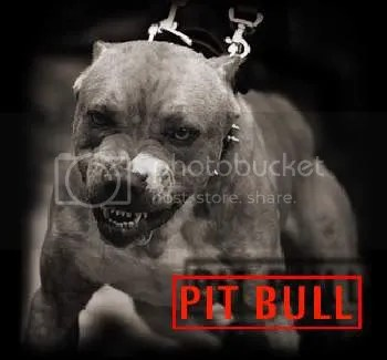 pitbull graphics and comments