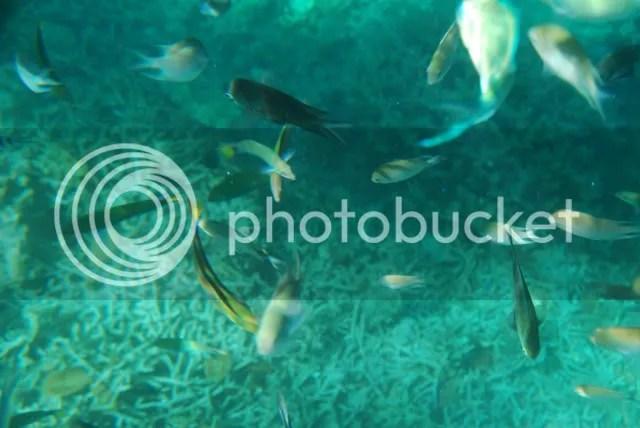 Marine Life at Siete Pecados