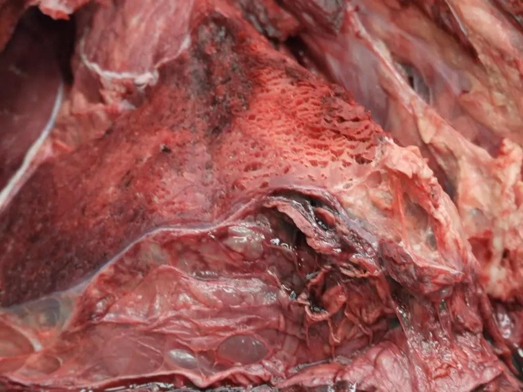 emphysema, necrosis and hemorrhage