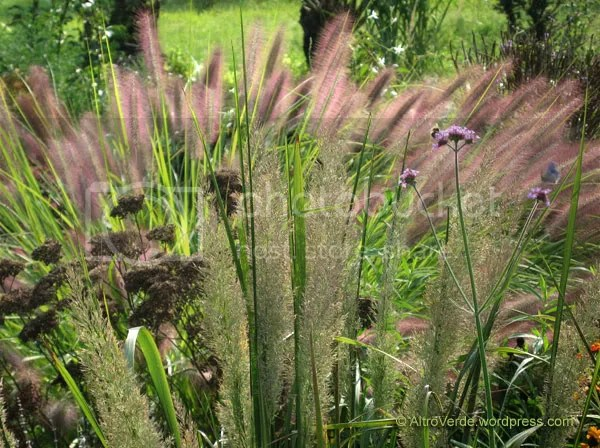 A nice pattern formed by calamagrostis brachytricha, dried achillea flowers and same old pennisetum 'Magic'. Verbena bonariensis cheers up the color palette.