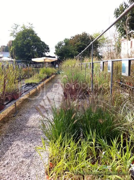 Part of the grasses corridor, there were some very interesting varieties