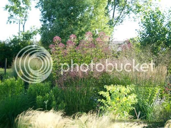 Grasses Garden