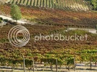 Wijnboerderij Bertolotto
