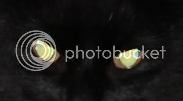 photo e24f98d1-6043-4ab0-8a0d-adb9bcb29f6b_zps6e75f8f0.jpg