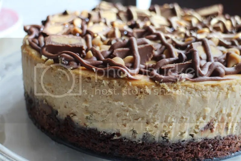 peanut butter cup brownie bottomed cheesecake