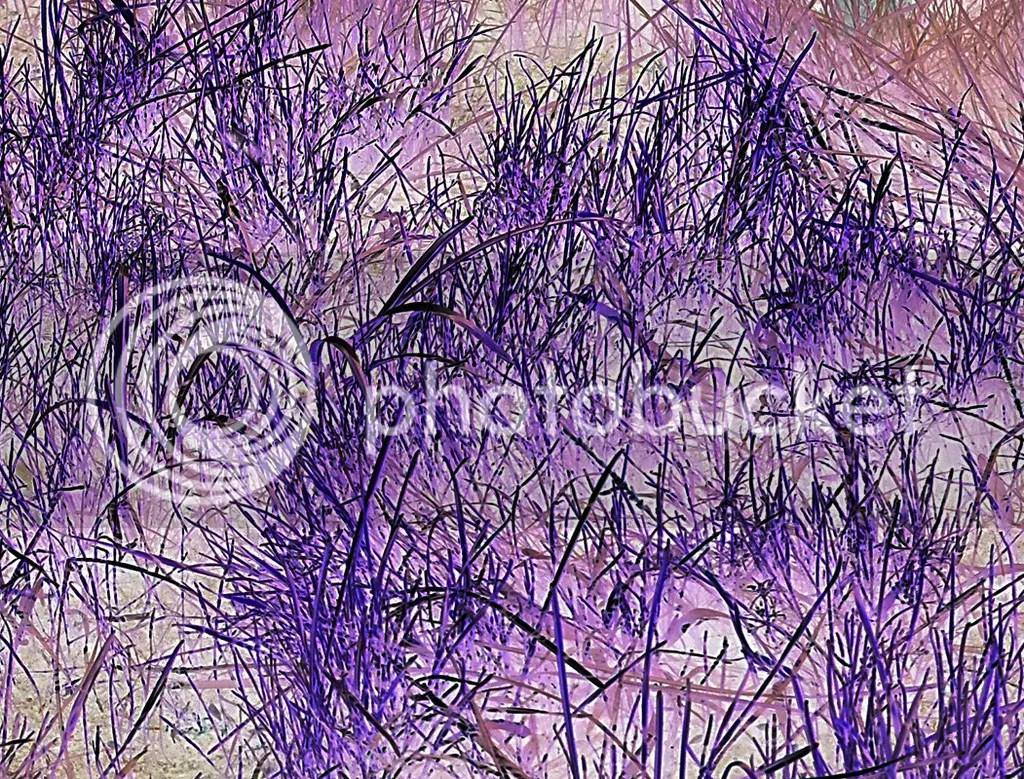 photo Grass - Lakewood CA_zpsiukb5c05.jpg