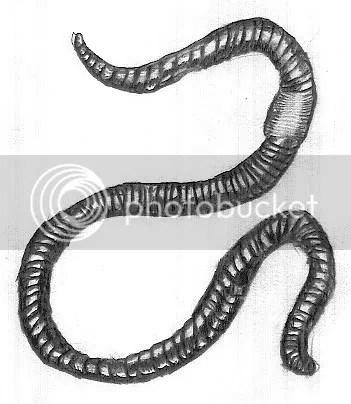 earthworm coffee
