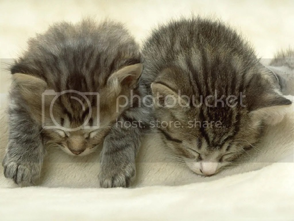 sleeping cats Pictures, Images and Photos
