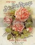 Scott's Garden Roses