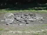 168.jpg Stone circles Saroma Lake picture by Heritageofjapan