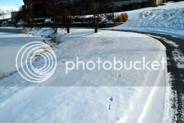 photo DSC_0910-001.jpg