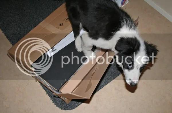 När det var IKEA saker som skulle monteras ihop hade jag förståss väldigt stor hjälp av Bowie!