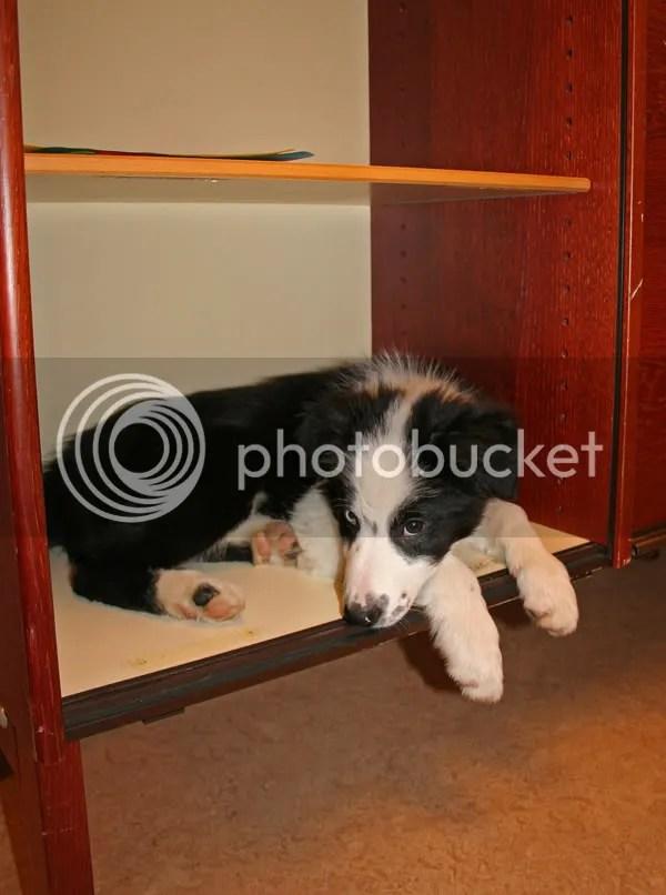 När matte jobbar natt blir man ju lite trött, då är det tur att det finns en hylla att sova på....