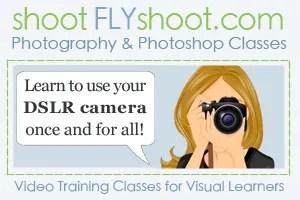 Shoot Fly Shoot