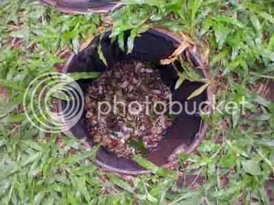 Sampah organik rumah tangga di dalam komposter. Setelah penuh, pindah ke komposter berikut yang bahan organiknya sudah menjadi kompos.