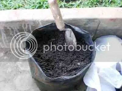 Kompos di polybag diangin-anginkan di tempat teduh agar tidak terkena hujan.