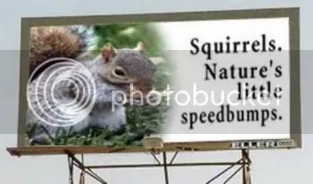 squirrel speed bumps