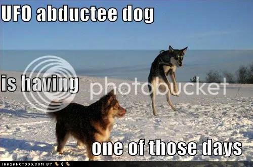 https://i2.wp.com/i272.photobucket.com/albums/jj181/Anndrayabelle/Macro/funny-dog-pictures-ufo-abductee-sno.jpg