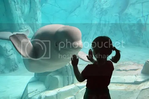 Beluga Whale Watching