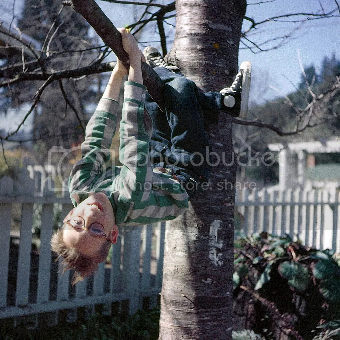 Shorpy, Hanging Kid, Out of a Limb, 1954