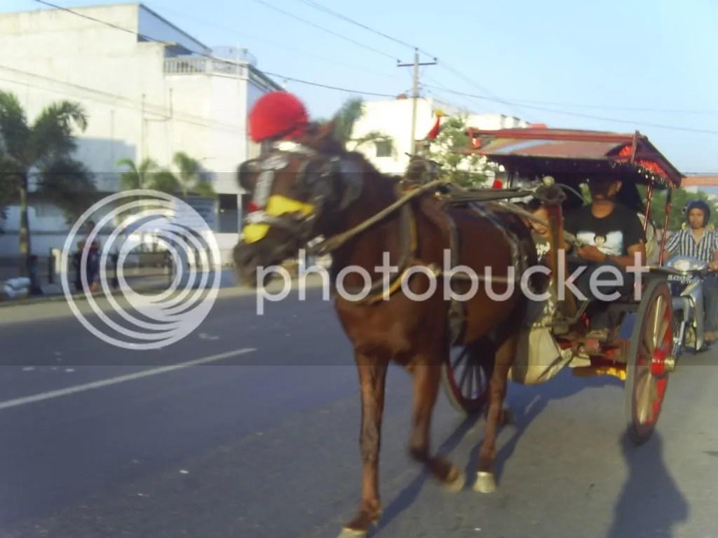 Delman Sarana Transportasi Hemat BBM