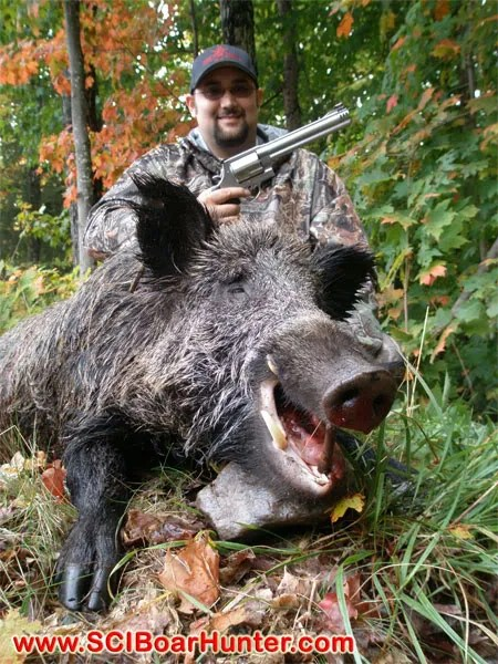 Russian Boar Hunting with a Cannon