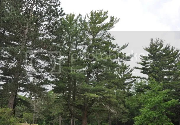 DSC_0453 trees